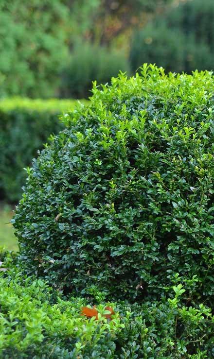 Well Grounded Landscape Design Build LLC Shrubs & Hedges